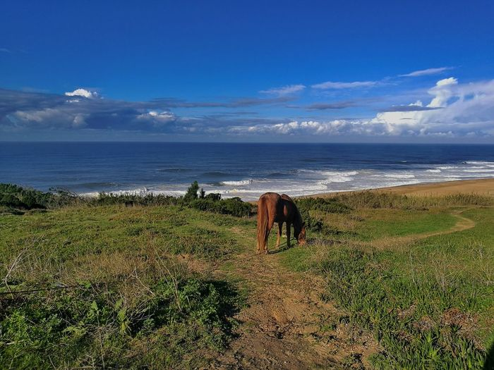Traveling Home For The Holidays Sea Beach Horse Riding Horses Nazaré  Nazare Portugal Huawei P9 Leica HuaweiP9 Destinationearth Portugal Outdoors Water Earth Nature No People Live For The Story