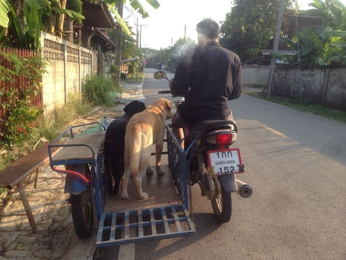 Mammal Domestic Animals Rear View Real People Transportation One Animal One Person Mode Of Transport Pets Land Vehicle Dog Day Men Full Length Outdoors Built Structure Architecture Lifestyles Sitting Building Exterior