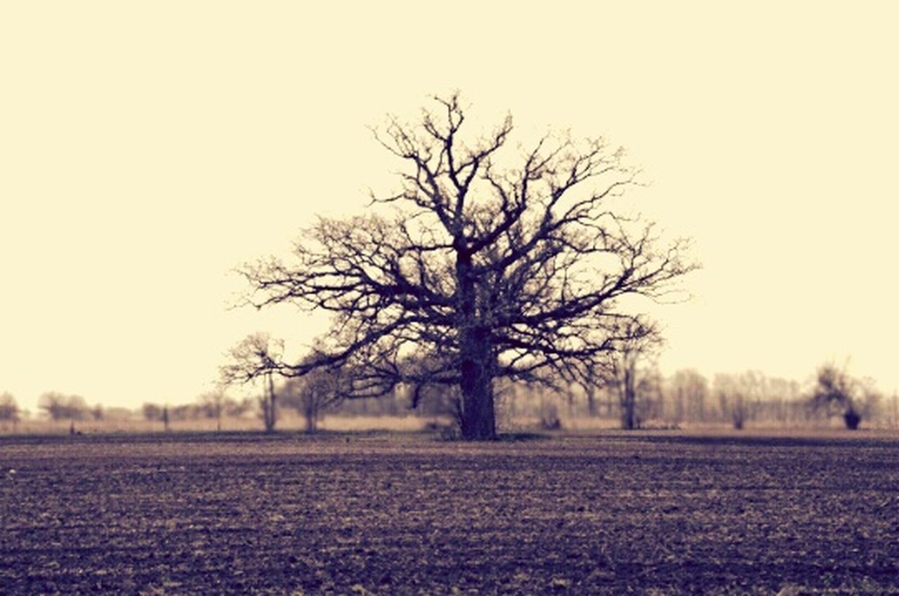 bare tree, landscape, tree, tranquility, agriculture, field, scenics, beauty in nature, rural scene, nature, lone, cold temperature, winter, outdoors, no people, day, sky