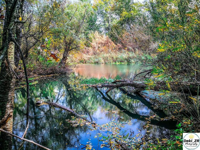 Ecka/Serbia, 2018 by Deki_ZR Photography Tree Water Plant Reflection Tranquility Lake Beauty In Nature Forest Growth Tranquil Scene Scenics - Nature Nature No People Non-urban Scene Idyllic Day Land Branch Autumn Outdoors Change Flowing Water Deki_ZR Ecka Vojvodina