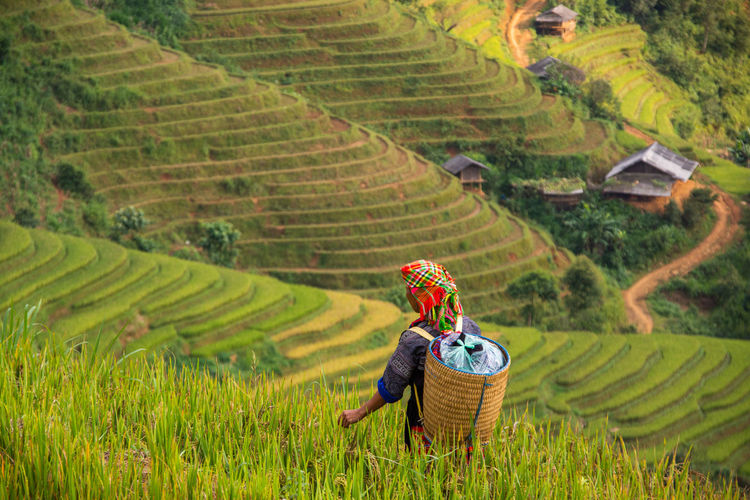 Rear view of woman standing on rice paddy