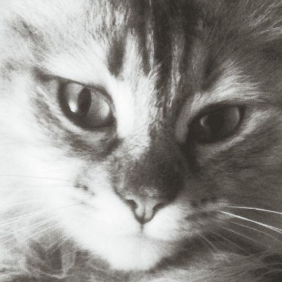 Cat Black & White Cute Love