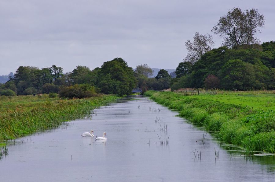 this is my photo of the week Water Agriculture Animal Wildlife Outdoors Tree Landscape Nature Bird No People Animal Themes Day Somerset Levels Uk