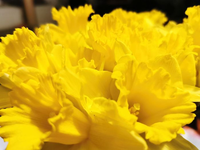 Close-up of yellow flower bouquet