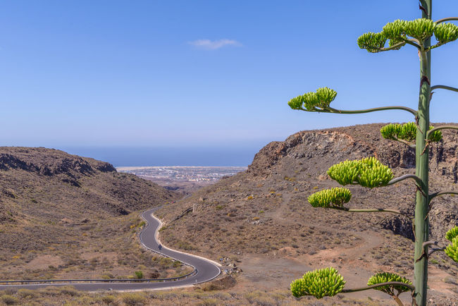 Raw Gran Canaria Landscape Agave Deserti Canarias Canary Islands Gran Canaria Gran Canary Island Gran Canaria Paradise Landscape_Collection SPAIN Travel Travel Photography Travelling Agave Agave Flower Agave Plant Canary Canary Scape Canary ıslands Landscape Landscape_photography Landscapes Nature Scapegoat Nature Scenery Roadtrip Travel Destinations