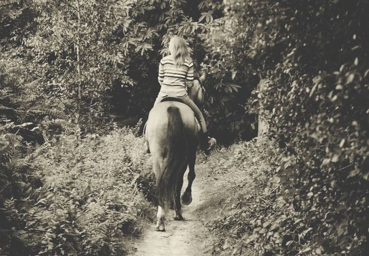 Horse Horseriding Nature Enjoying Life
