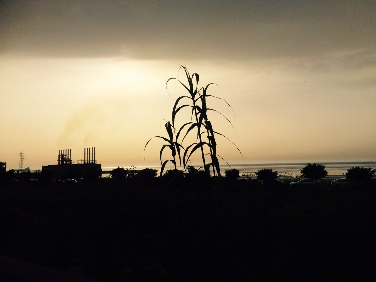 silhouette, sunset, sky, tree, outdoors, nature, built structure, scenics, no people, architecture, beauty in nature, building exterior, city, day