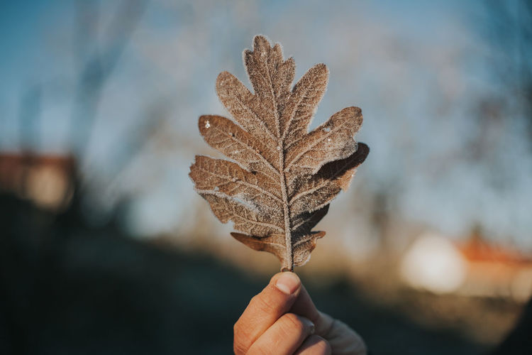 Close-up of hand holding frozen leaf during winter