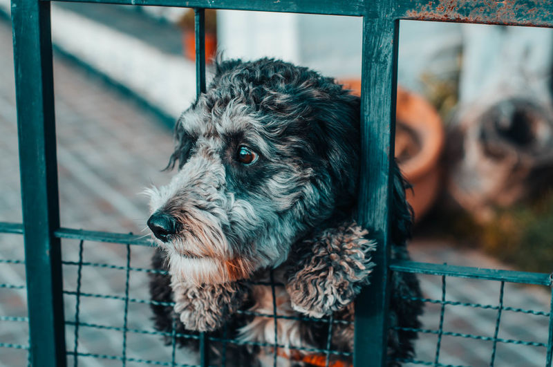 Animal Animal Head  Animal Themes Barrier Boundary Cage Canine Close-up Dog Domestic Domestic Animals Fence Focus On Foreground Looking Looking Away Mammal Metal No People One Animal Pets Vertebrate