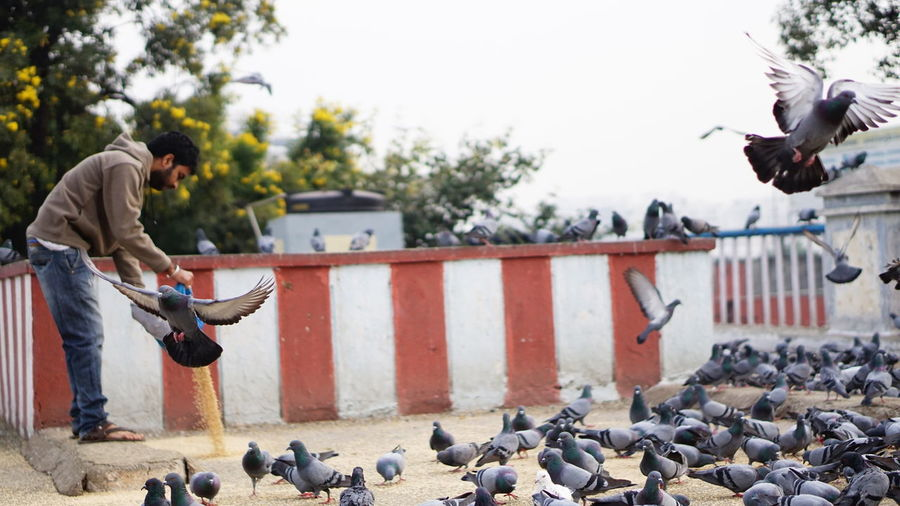 """Pigeon said """"me or grains??"""" One Man Only Only Men One Person Adult Adults Only Day Outdoors People Winter Men Sky Sonyalpha Hyderabaddiaries Sony A6000 Sony Alpha Photography Nwin Photography Pigeonslife Pigeons Pigeon Stories EyeEm Birds Candid Photography Candidshot Storytellingphotography Untold Stories Large Group Of Animals"""