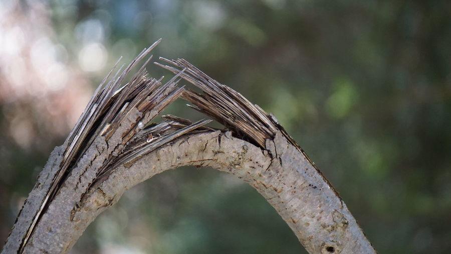 Broken Wood Ast Branch Broken Holz Selective Focus Twig Wood Wooden