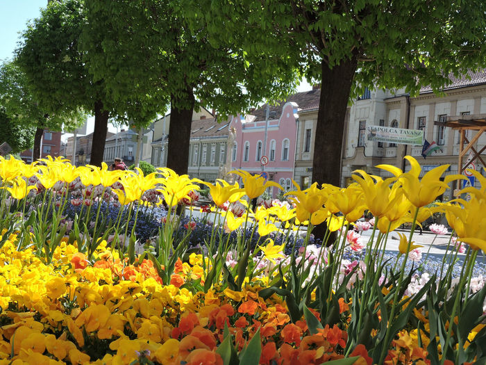 Yellow flowering plants by building