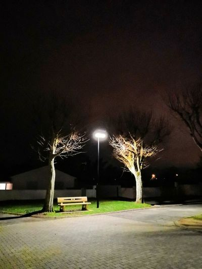 Tree Illuminated City Sky Electric Light Park - Man Made Space Street Light