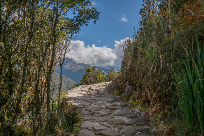 Park of the Inca Trail to Machu Picchu Hiking Inca Trail Machu Picchu Stone Path Trekking Adventure Beauty In Nature Cloud - Sky Day Growth Mountain Nature No People Outdoors Paved Path Plant Scenics Sky Tranquil Scene Tranquility Tree
