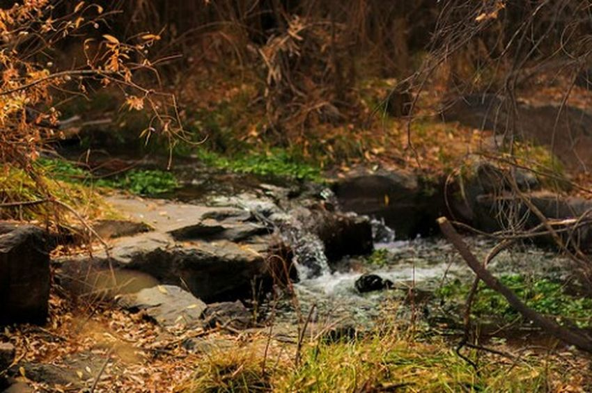 Beautiful little place in downtown Castle Rock Nature Water Forest Tranquility Outdoors River Grass Tranquil Scene Beauty In Nature Stream - Flowing Water Day Waterfall No People Autumn Colorado Creek Stream Nature Grass Outside Photography Outside
