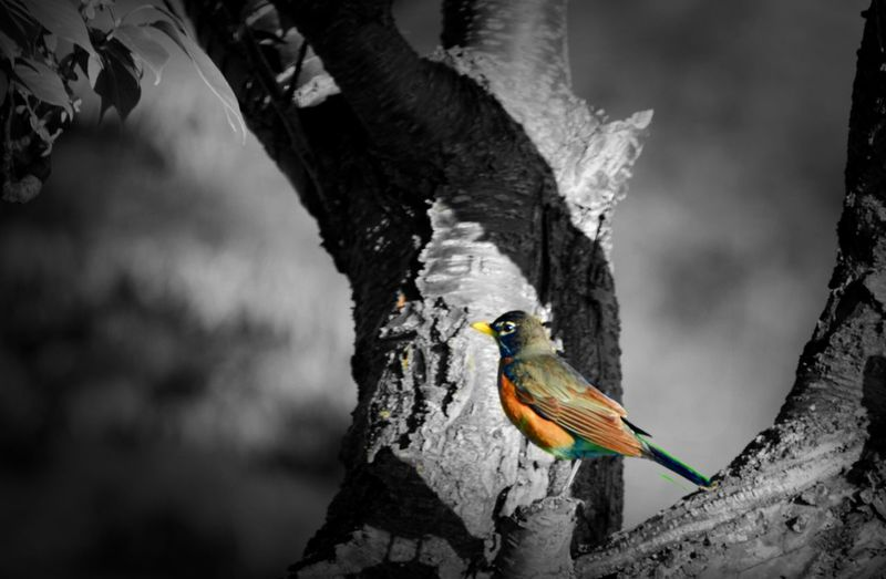 Birds Coloursplash Wildlife What My Eye Sees