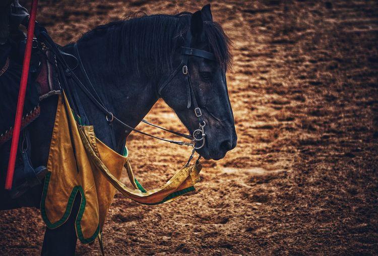 Horse standing on muddy field