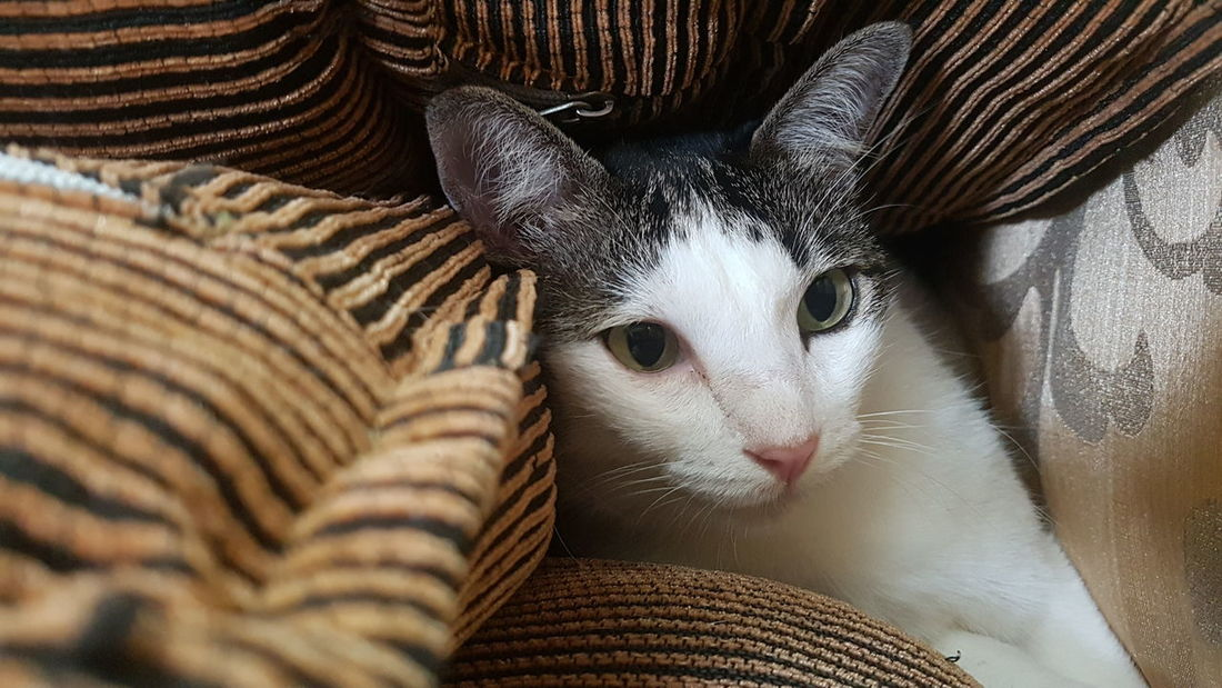 Kittens Cats Animal Mammals Hiding Peeking Out Furry Pillows Stripes Pattern Portrait Headshot Close-up Cat Feline Whisker Domestic Cat Animal Head