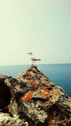 приключения Sia прогулка природа и красота First Eyeem Photo фиолент ПриродаМоимиГлазами