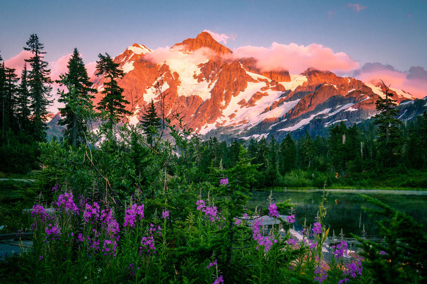 Beauty In Nature Day Flower Forest Growth Lake Landscape Mountain Mountain Range Nature No People Outdoors Scenics Sky Tranquil Scene Tranquility Tree