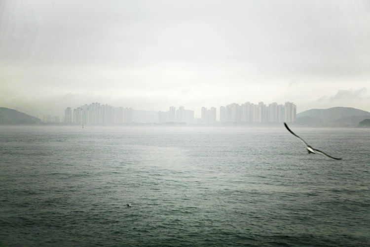 Close-Up Of Seagull Flying Over Sea During Foggy Weather