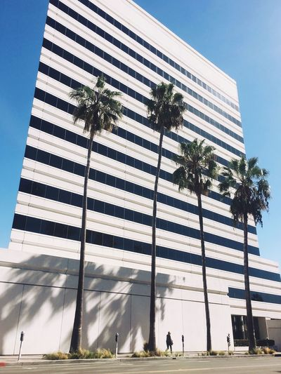 Architecture Striped Palm Tree City EyeEm Los Angeles Los Ángeles California Perspective
