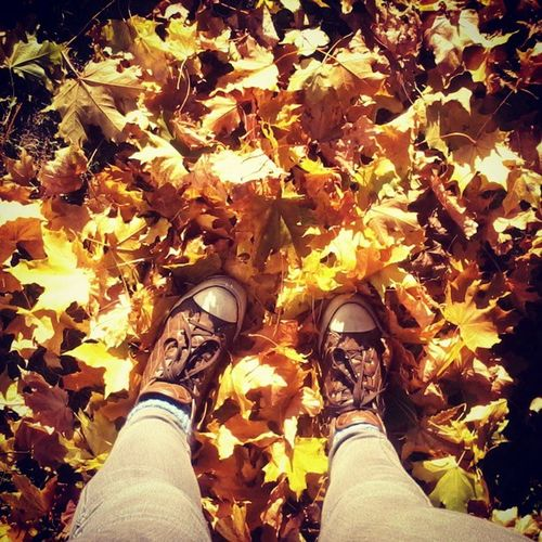 ? Autumn Leaves Autumn Lover Colorful Leaves Of Loneliness