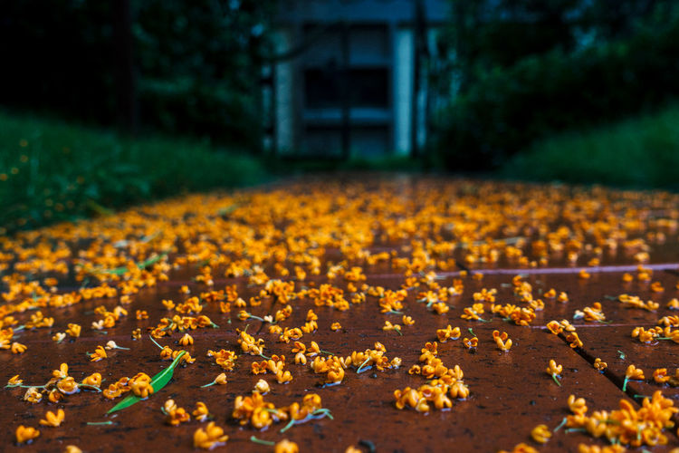 Yellow flowers on footpath during autumn