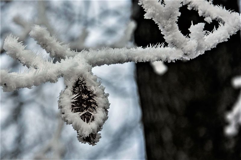 Beauty In Nature Branch Close-up Cold Temperature Day Focus On Foreground Fragility Frost Frozen Ice Ice Crystal Nature No People Outdoors Snow Snowflake Tree Weather White Color Winter