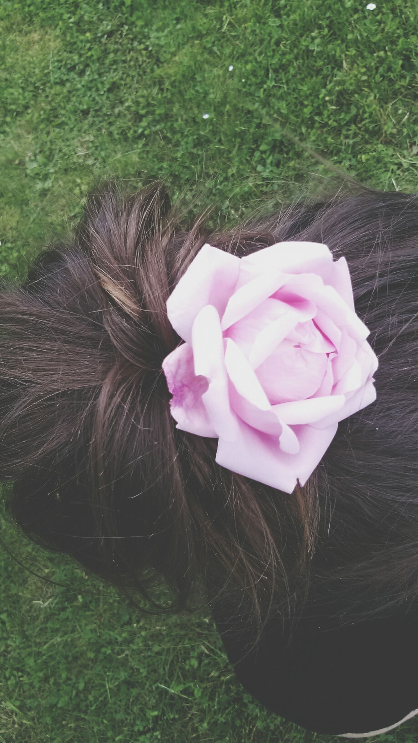 flower, pink color, petal, freshness, flower head, fragility, growth, beauty in nature, high angle view, single flower, close-up, nature, grass, blooming, plant, rose - flower, outdoors, field, park - man made space, day