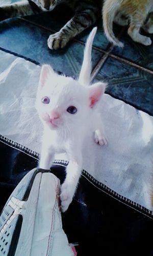 Cat Cat♡ I Love My Cat ❤ Coolcats  Cat Lovers Baby Cat♡ Cats Cats Of EyeEm Cats 🐱 Beautiful Cat