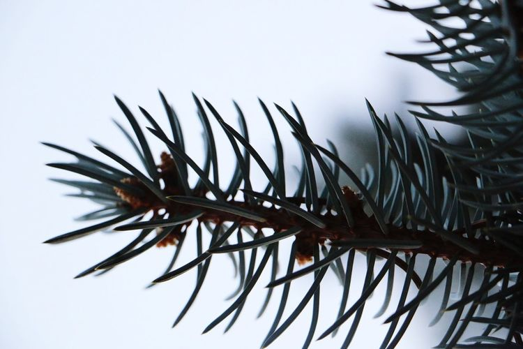 No People Close-up Nature Spiky Day White Background Needle - Plant Part Outdoors Beauty In Nature Sky Low Angle View Scenics