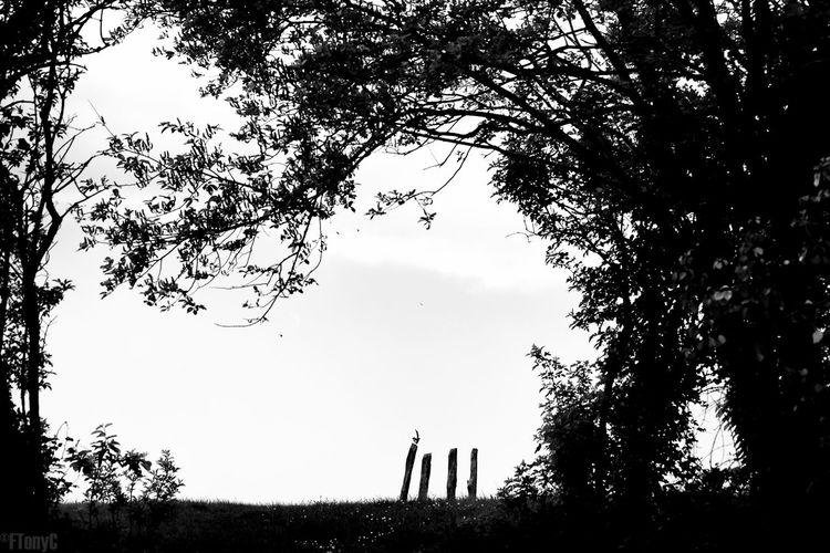 Bird Blackandwhite Cloud - Sky Contrast Darkened Heart Magpie Monochrome Nature Outdoors Pica Pica Poet's Walk Silhouette Tennyson Trees Wain's Hi Wain's Hill