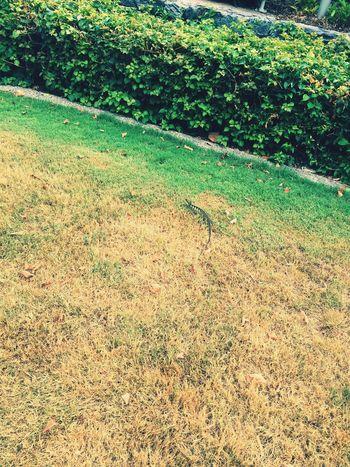 😍😍 Water Dragon Lizard Peaceful Nature Academy Walk