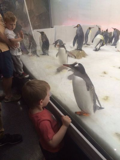 Penguins Exploring Hanging Out