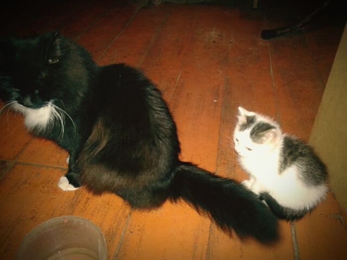 Misha And Kyzia Cat Funny Cats My Mom Cats Black And White