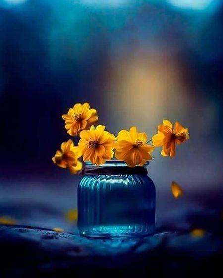 Miss you so much 😢😔😓 Driss Flower Head Flower Airtight Perfume Jar Petal Vase Blue Studio Shot Close-up Mason Jar Daffodil Pollen Blooming Hibiscus Sunflower Stamen