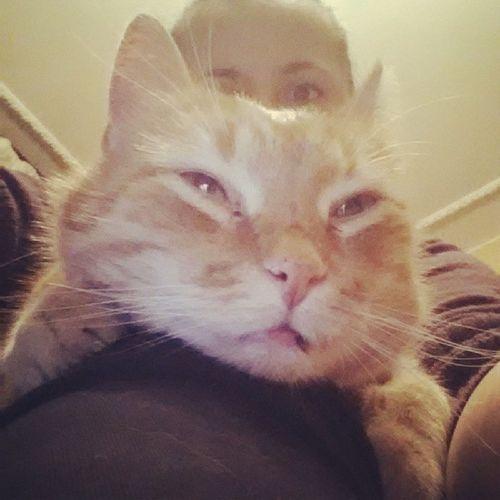 Rozpieszczony Kocur Wynajal Sobie smyracza kotelek cat kitty boleslaw @jarzynaa @pawellllo pieszczoch