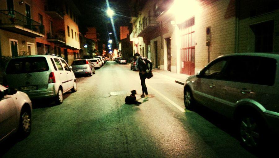 Midnight walk ..puppy love