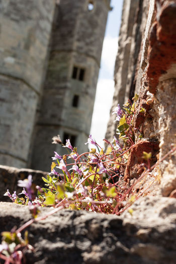 Nature will flourish English Heritage Building Architecture Beauty In Nature Building Building Exterior Built Structure Close-up Day English Heritage Flower Flower In The Ruin Flowering Plant Fragility Freshness Growth History Nature No People Outdoors Plant Selective Focus The Past Titchfield Abbey Vulnerability