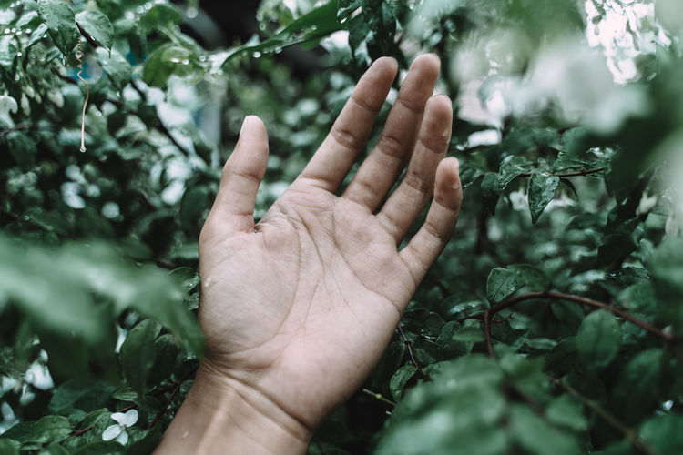 Close-up of hand against plants
