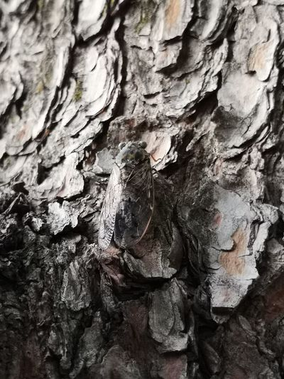 Rock Face Tree Backgrounds Cave Tree Trunk Full Frame Textured  Bark Rough Rock - Object