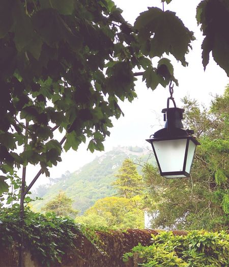 Low angle view of lantern hanging on tree by building