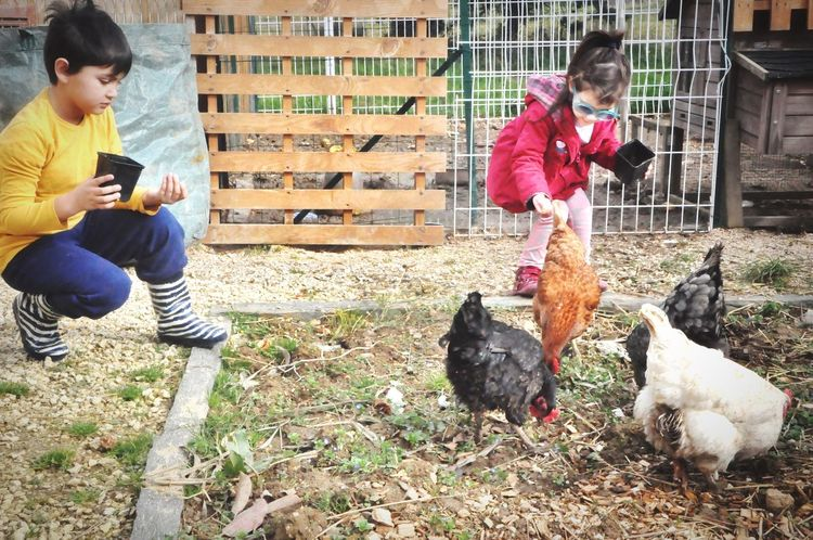 Animal Togetherness Pets Friendship Child Playing Dog Domestic Animals Animal Themes Full Length Bird People Outdoors Mammal Adult Day Children Chickens Poules Gallinas