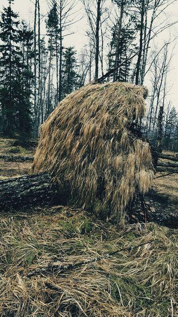 #krasnoyarsk #Mana #siberia #kvadro #offroad Tree Sky Grass Woods Tree Trunk Tranquility Bark Countryside Sunrays Fallen Tree Greenery Plant Bark Dead Tree Green Lakeside Moss Hazy  Palm Frond Calm Country House Farmland Narrow Branch Grassland Pathway