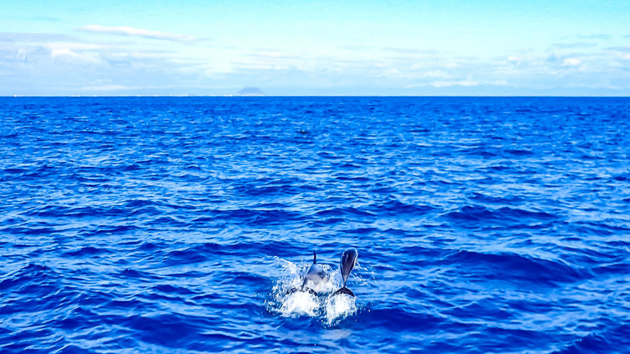 Dolphin Watching  Dolphins Animal Animal Themes Animal Wildlife Animals In The Wild Beauty In Nature Blue Day Horizon Horizon Over Water Marine Nature No People One Animal Outdoors Scenics - Nature Sea Sky Swimming Vertebrate Water Waterfront