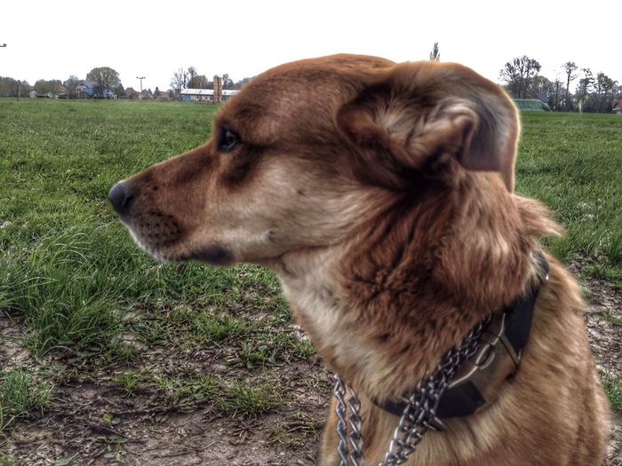 Hund beim Gasiegehen One Animal Animal Dog Charlie Gasiegehen