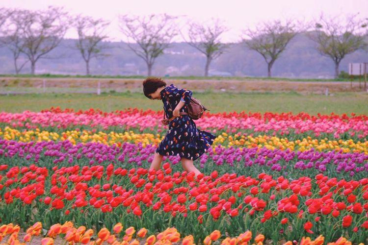Aesthetics GoodTimes Enjoylife Tulips SAKURA City Japan Chiba Unknownjapan Flowergirl Happiness Wanderlust Plant Flower Flowering Plant Beauty In Nature Growth Land Field Freshness Scenics - Nature Outdoors