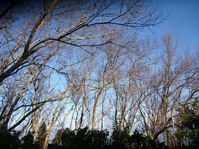 Look Tree Branch Forest Sky Treetop Long Shadow - Shadow Growing Tranquil Scene Countryside Scenics High Section Single Tree Upward View Tree Canopy  Outline
