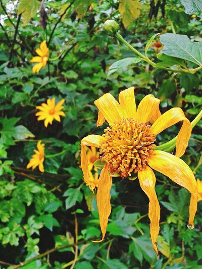Floresnativas Flor Estomalina Flores Natureza Perfeita♡♥ Brasil ♥ Peruíbe City